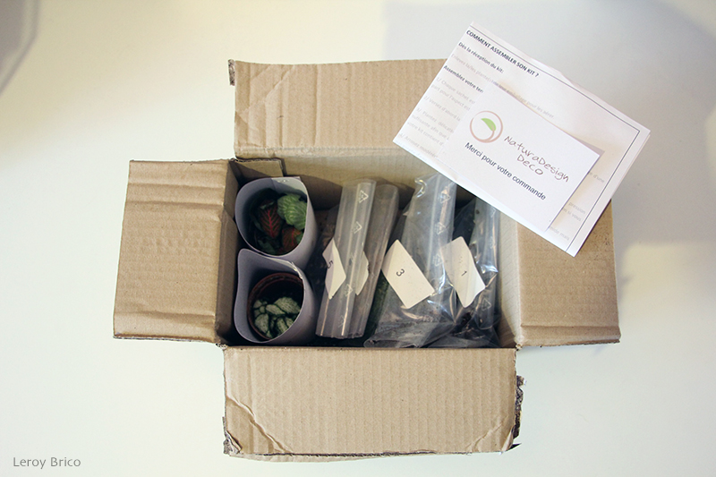 Terrarium en kit