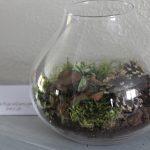 Décoration | Un terrarium en kit
